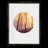 Circular Forest I