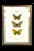 Mariposa Enciclopedia II