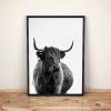 B&W Highland Cow